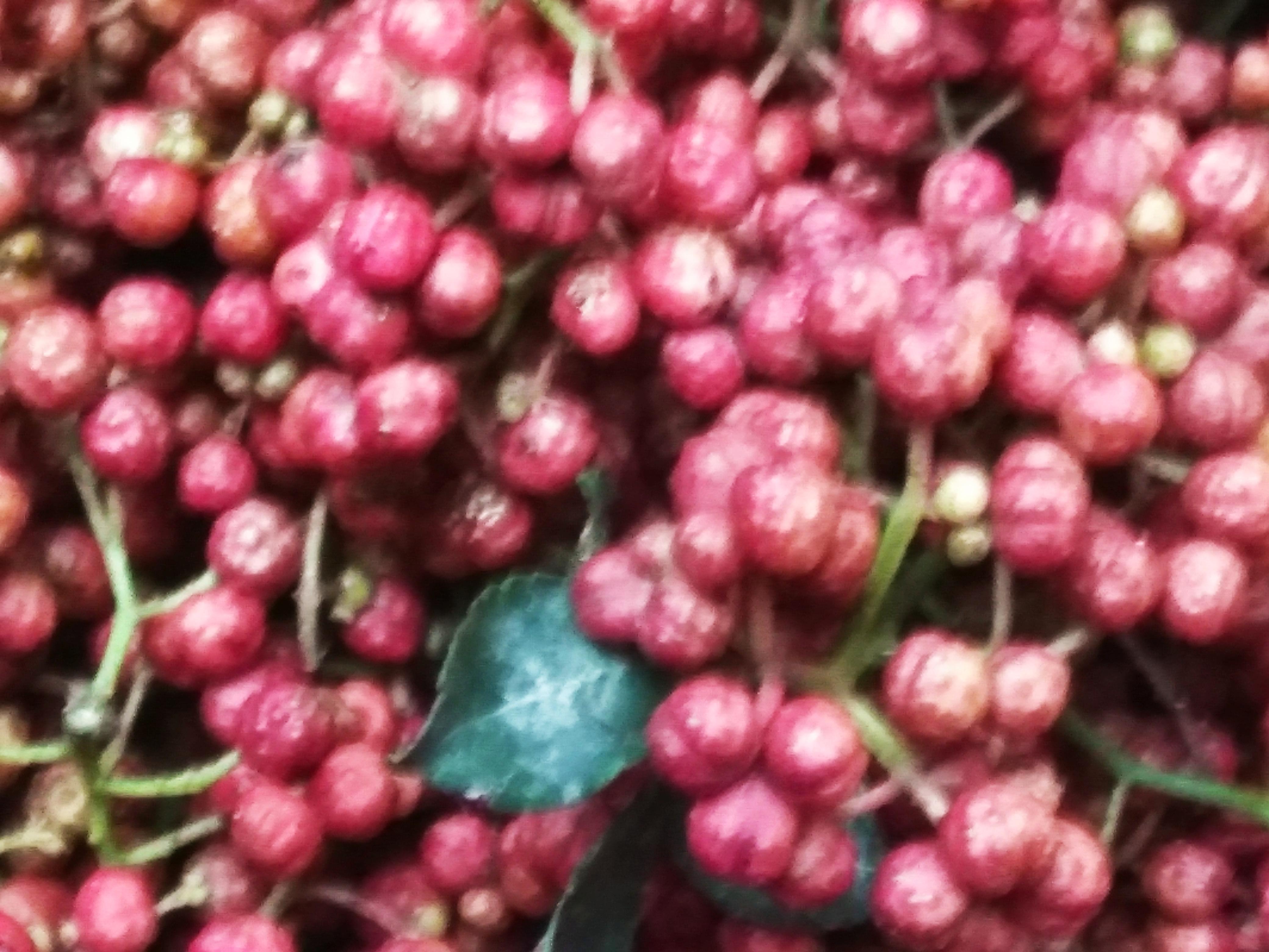 花椒,大红袍